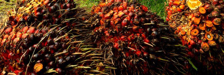 MPOB develops palm oil polyol